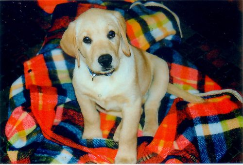Bosco being an adorable puppy circa 2002